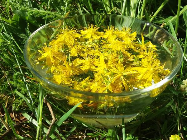 Esencia floral de Hiperico