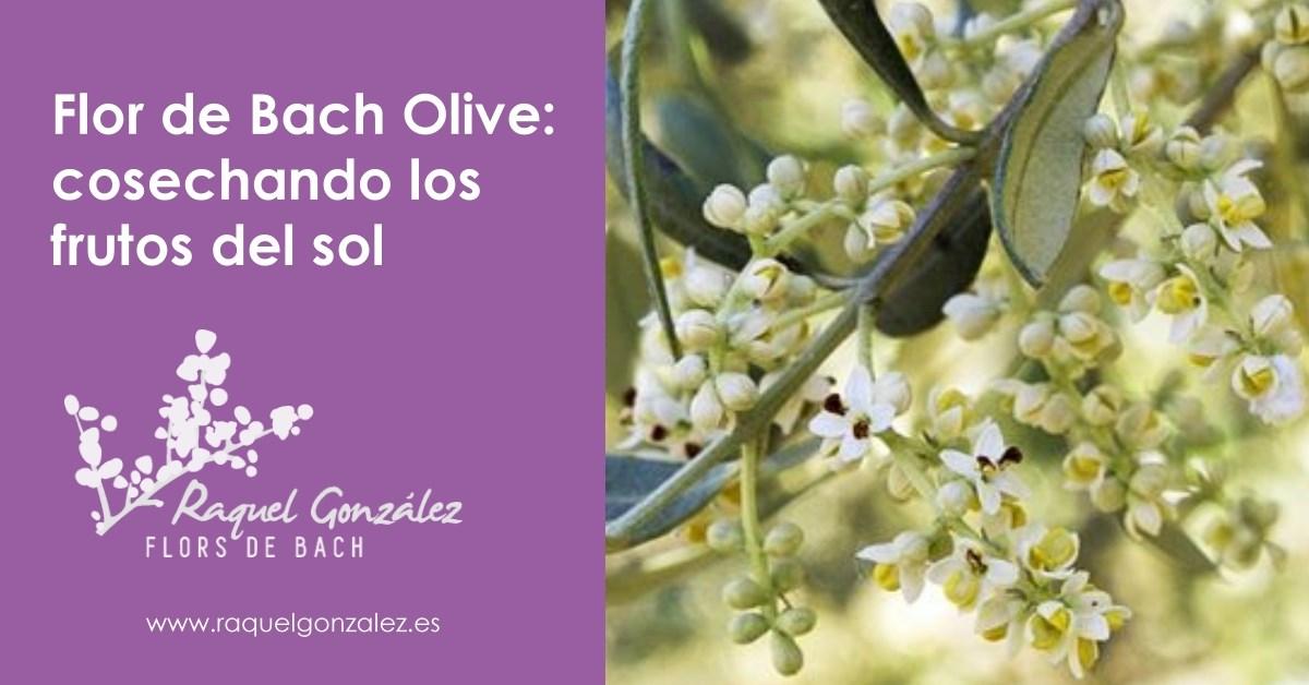 flor de bach olive