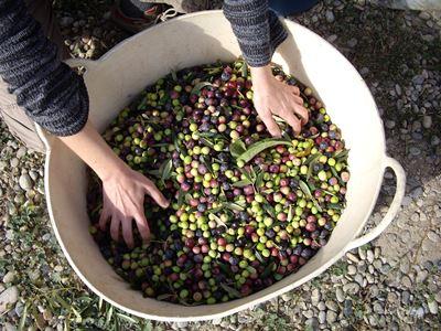 Olive flores de Bach. Raquel González