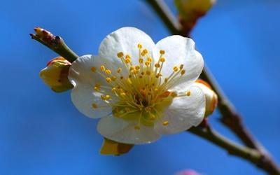 Terapia Floral de Bach